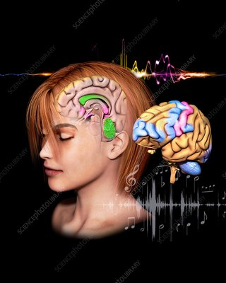 Music and the human brain, illustration