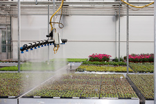 Bedding plant production, Scotland, UK