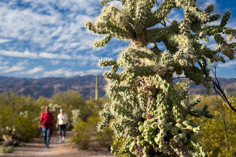 saguaro national park trees
