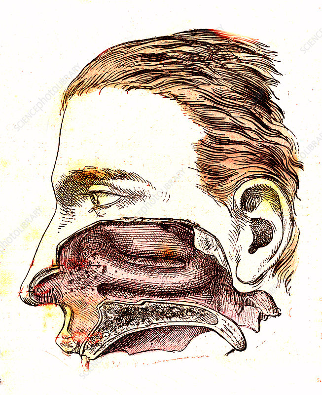 Human mouth anatomy, 19th Century illustration