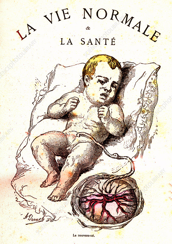 Baby and placenta, 19th Century illustration