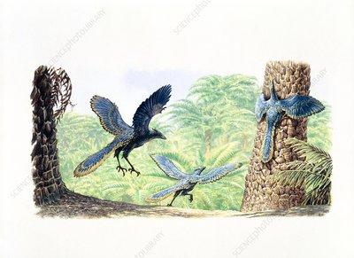 Archaeopteryx, illustration