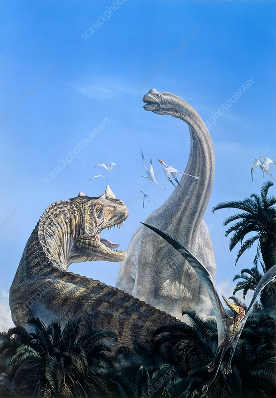Brachiosaur and ceratosaur dinosaurs, illustration