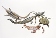 Cretaceous marine life, illustration