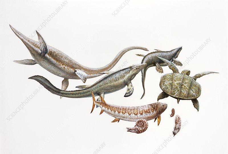 Cretaceous marine life, illustration