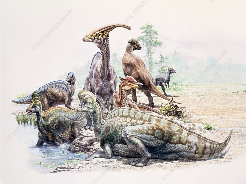 Hadrosaur dinosaurs, illustration