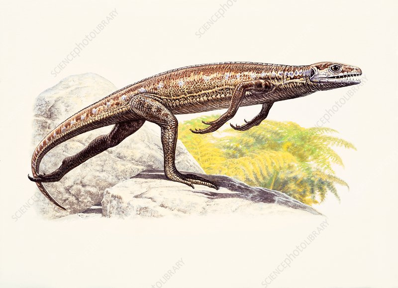 Heleosaurus, illustration