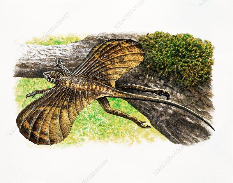 Icarosaurus prehistoric lizard, illustration