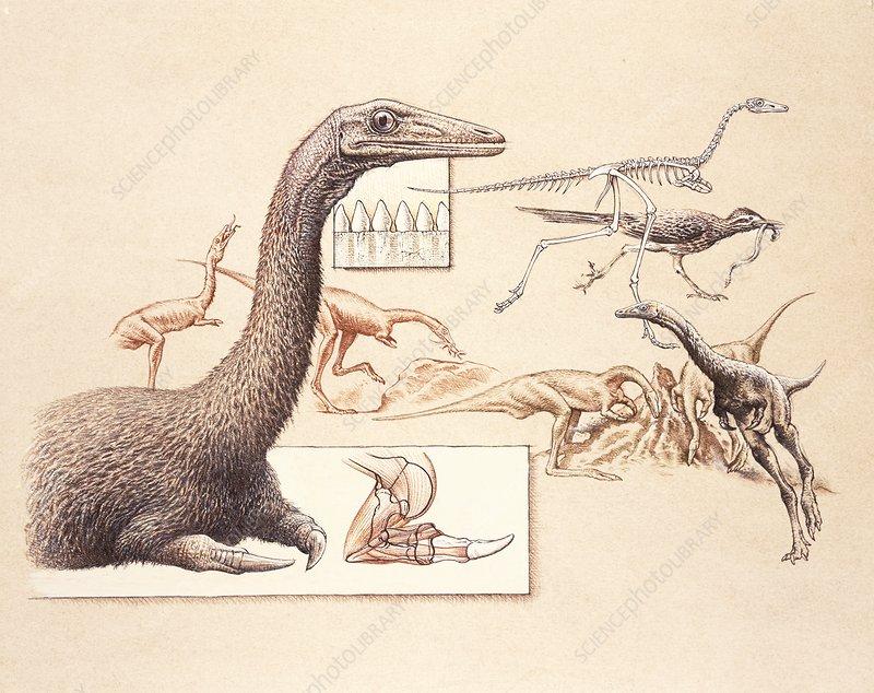 Mononykus dinosaur anatomy, illustration