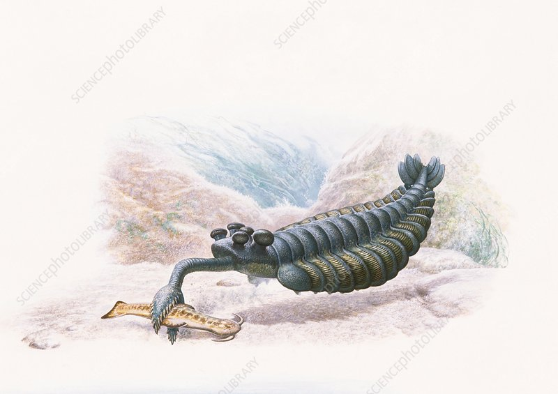 Opabinia, illustration