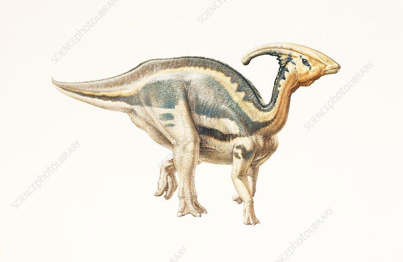 Parasaurolophus dinosaur, illustration