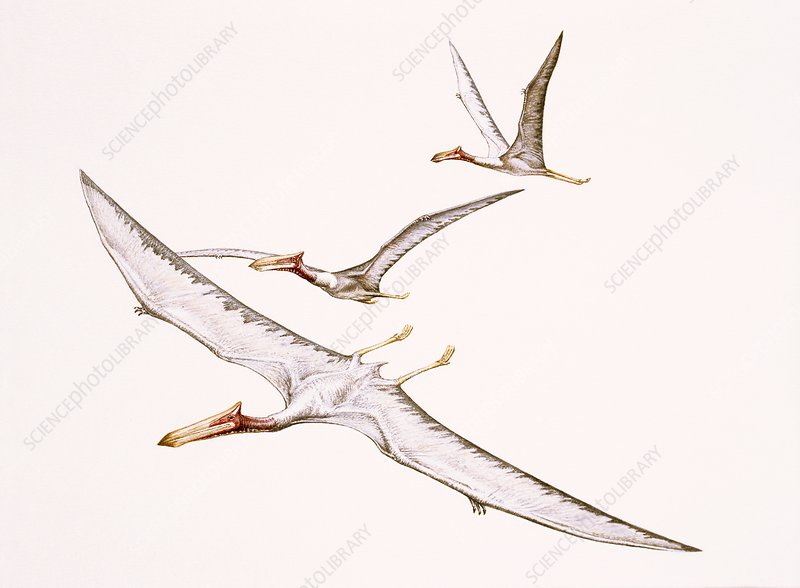 Quetzalcoatlus pterosaurs, illustration