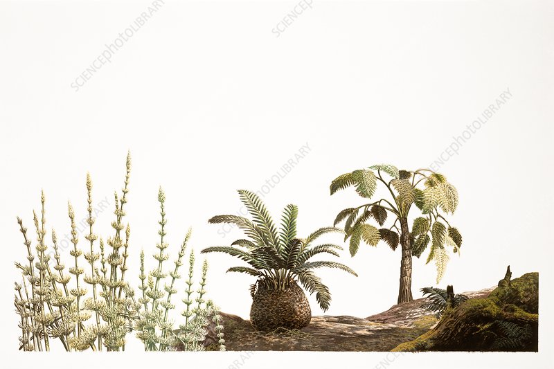 Triassic plants, illustration