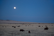 Full moon over cattle ranch, Arizona, USA