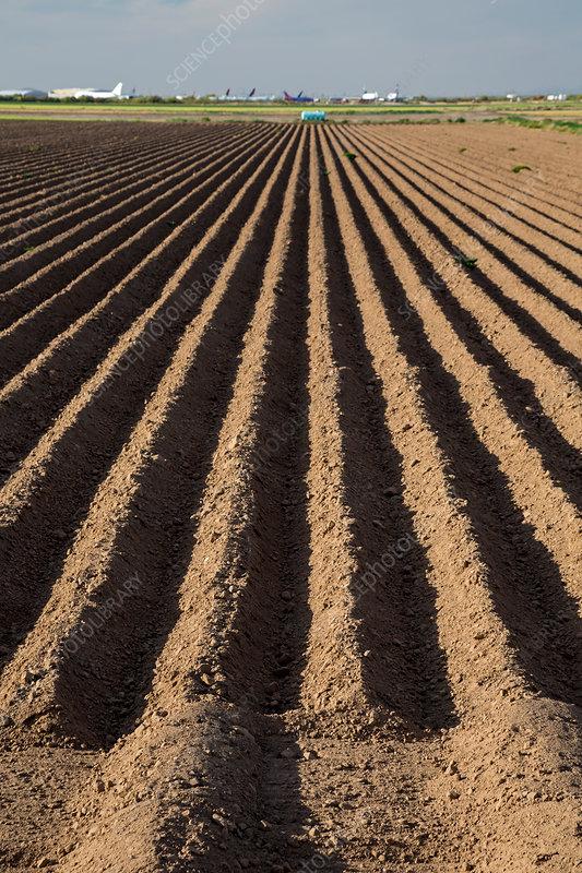 Sonoran Desert farm, USA