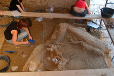 Mammoth fossil excavations