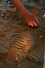 Mammoth fossil footprint excavation