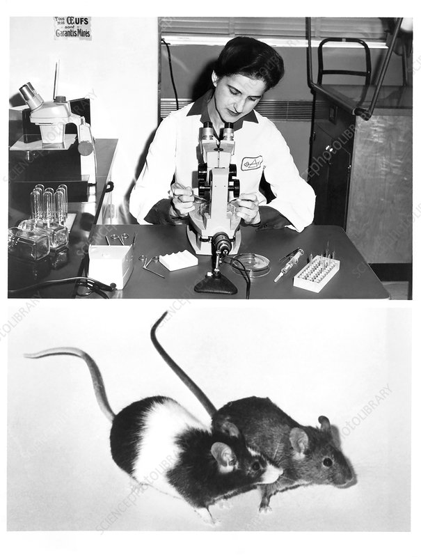 Beatrice Mintz, US embryologist
