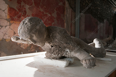 Body cast of a victim of the Pompeii eruption