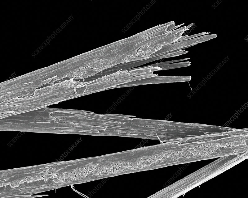 Human hair with split ends, SEM