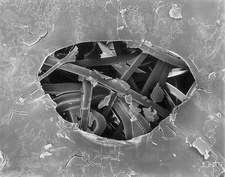 Band-aid with dried blood, SEM