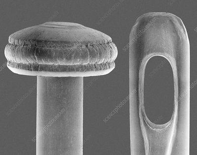 Pin and needle, SEM