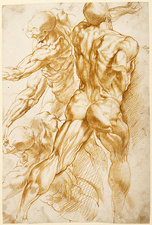 Rubens' anatomical studies
