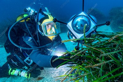 Diver with automated marine research camera