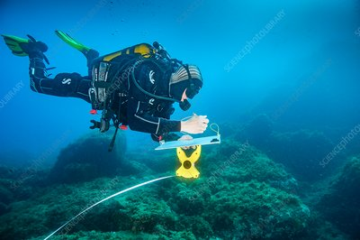 Diver carrying out marine research
