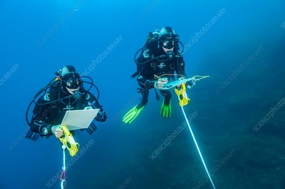 Divers carrying out marine research