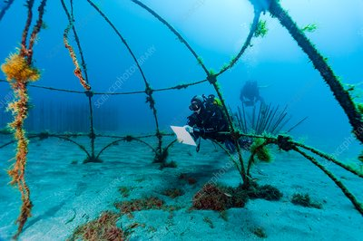 Divers monitoring an artificial reef