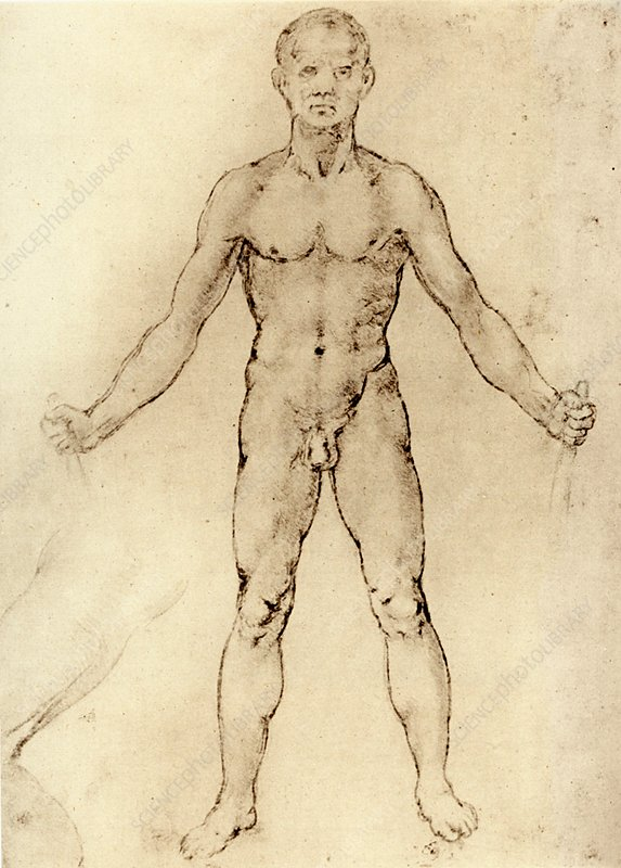 Leonardo: Nude man from the front