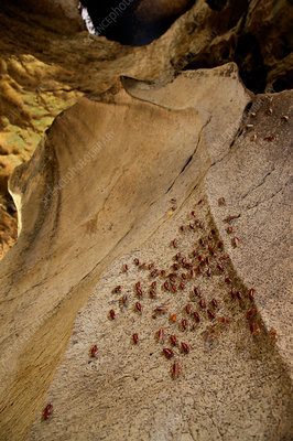 Roaches on cave walls