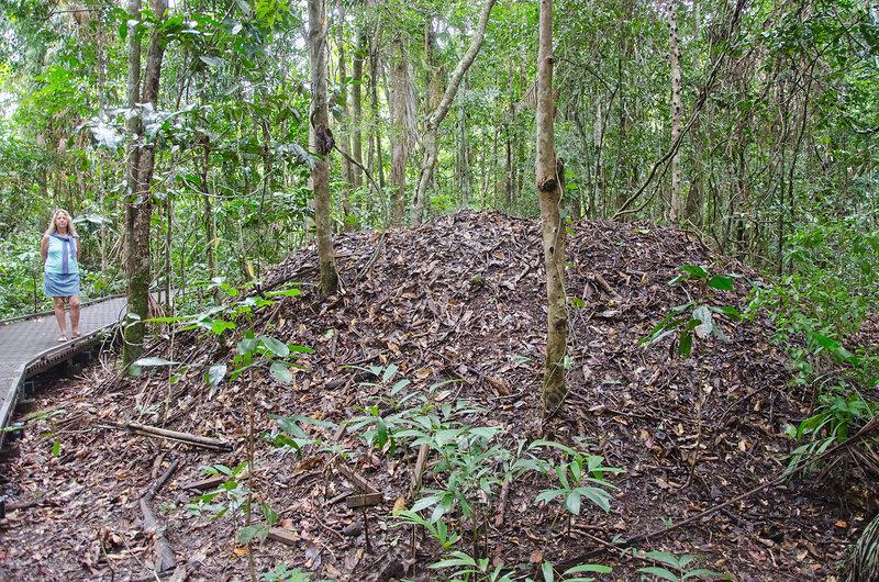 Megapode Mound Nest