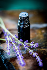 Essential oil of lavender