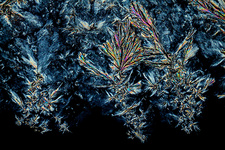 Polyethylene glycol crystals, light micrograph
