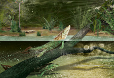 Tiktaalik prehistoric fish, illustration
