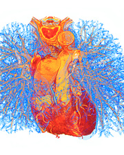 Heart and lung bronchioles, 3D CT scan