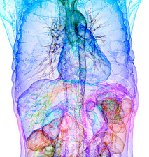 Human internal organs, 3D CT scan