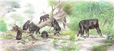 Griphopithecus, illustration