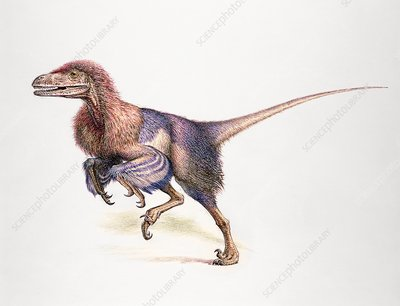 Dromaeosaur, illustration