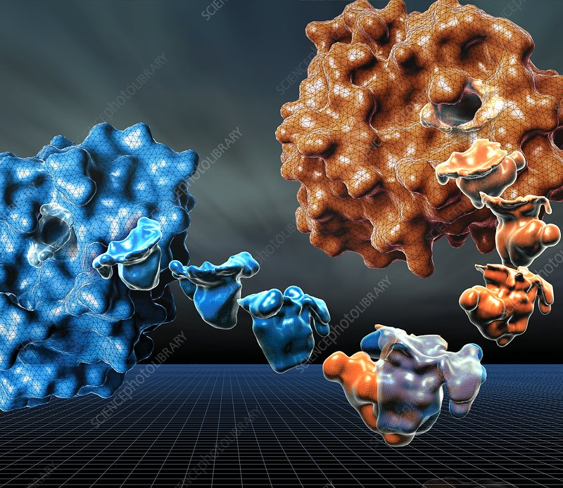 Computer modelling of proteins, illustration