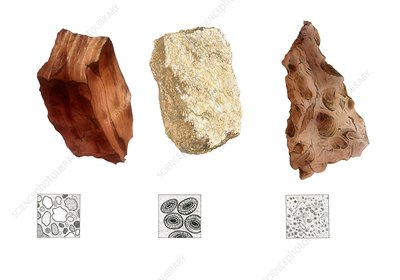 Sandstone, limestone and mudstone, illustration
