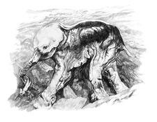 Prehistoric baby mammoth, illustration