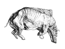 Woolly rhinoceros fossil, illustration