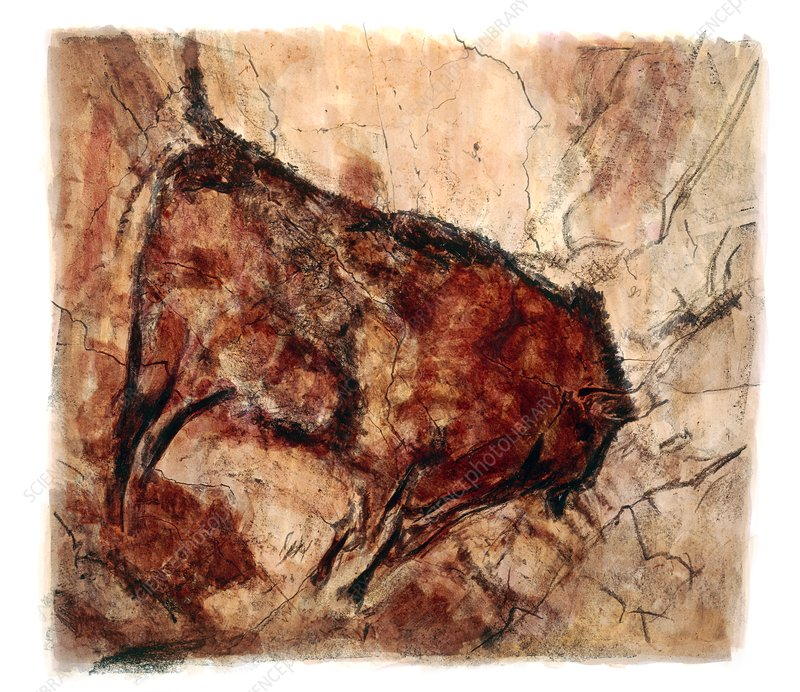 Bison cave painting, illustration