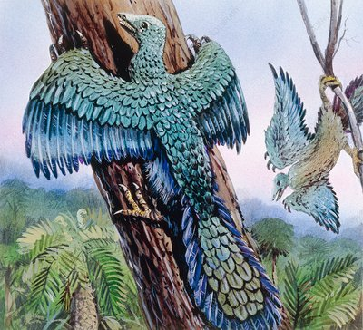 Archaeopteryx, illustration