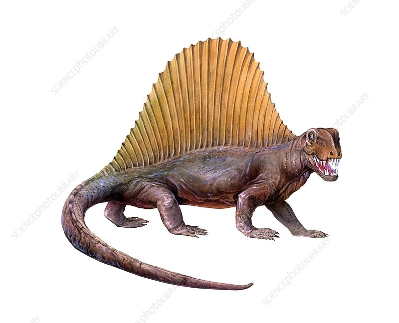 Dimetrodon, illustration