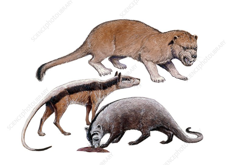 Prehistoric creodonts, illustration
