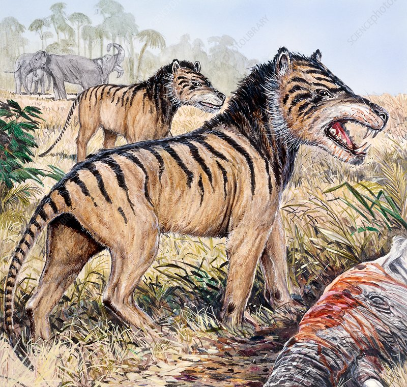 Hyaenodon, illustration
